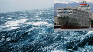 42 Believed Lost with 1 Survivor from Livestock Carrier off Japan